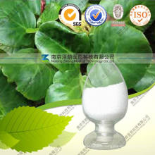 Factory Supply High Quality Bergenin 40%, 98%