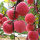 Ningxia Fresh Red Delicious Organic Apples Harga Murah