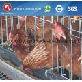 Silver Star Factory Outlet Poultry Equipment Chicken Cage