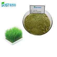 SOST Supply Wholesale 200 Mesh Organic Barley Grass Juice Powder