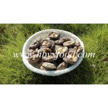 Cogumelo Shiitake Suado Seco