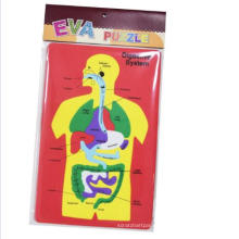 kids Digestive system EVA foam learning Puzzle