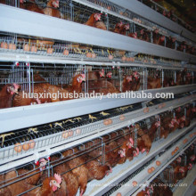 El diseño profesional del fabricante Un sistema de jaulas del pollo de la capa del tipo para la venta