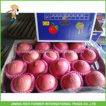 Export Chine Fruit Grade Un Fresh Fuji Apple Fruit avec le meilleur prix