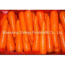 Carotte fraîche chinoise de qualité supérieure