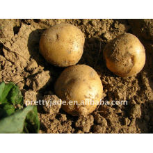 fresh potato with mesh packing