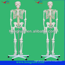 Advanced Life-size plastic human skeletons model