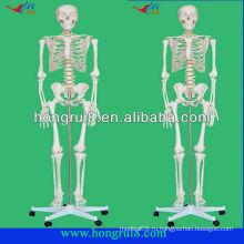 Продвинутая модель пластиковых человеческих скелетов в натуральную величину