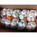 Alho branco Normal de alho fresco branco/chinês