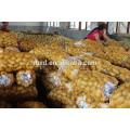 Harvester sweet potato at world price of potato