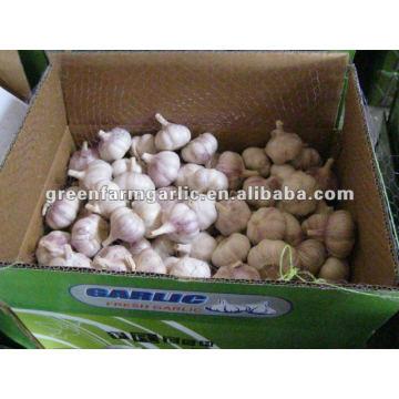 Ajo blanco chino como el precio más bajo en jining