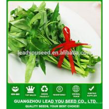 NWS03 Mafan vente chaude légumes feuilles, graines d'épinards de l'eau