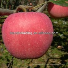exportateur de pommes fraîches