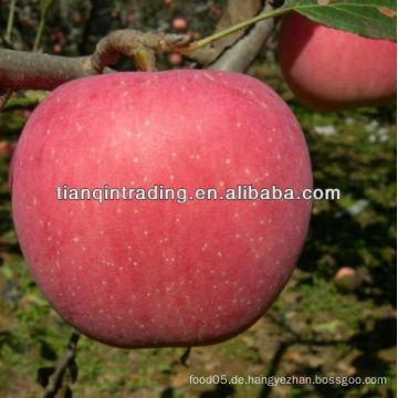 Frischer Apfel Exporteur
