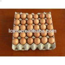 bandejas de huevos utilizaron sistema automático de recolección de huevos para la venta