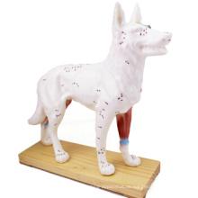 Kaufen Sie ein 12005 Tier Hund, Halbe Akupunktur und Half Muscle Dog Anatomisches Modell