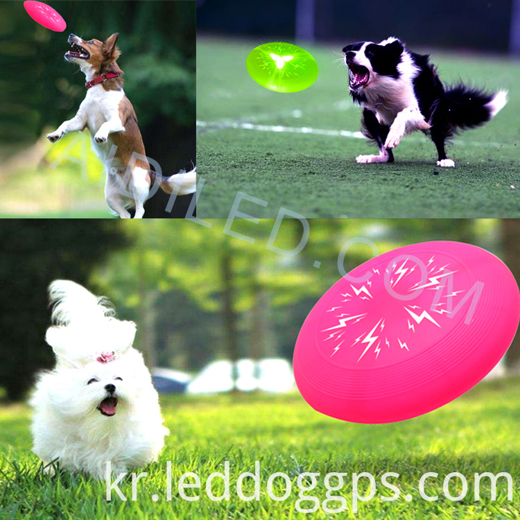 Led Dog Playing Frisbee
