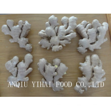 Global Gap 250g and up Air-Dry-Ginger for Sales