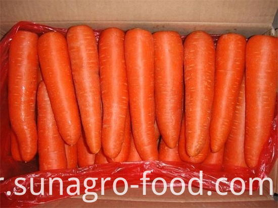High Quality Dig Carrots