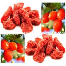 Wolfberry: uno de los mejores alimentos de la naturaleza