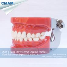 DENTAL 13001 modelos estándar de dientes dentales con 28pcs dientes extraíbles fijados por cera