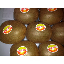 Novo Crop Kiwi Fruit para Venda