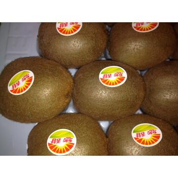 Fresh Juicy Kiwi Fruit Large Supplier