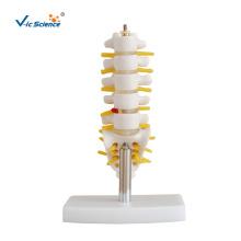 Mini modelo de anatomia de vértebras lombares
