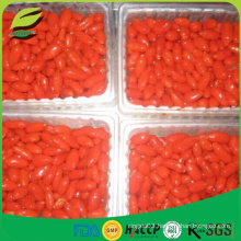 Top sell organic certified IQF frozen goji berries
