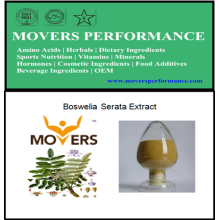 High Quality Plant Extract: Boswellin Serata Extract