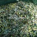 Alta calidad más reciente 95 g de una red de cosecha de aceitunas