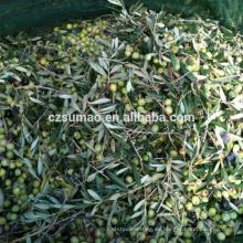 Red de cosecha de aceituna más vendida de la mejor calidad