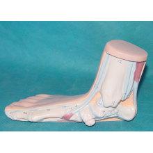 Menschliche flache Füße Anatomie Modell für medizinische Lehre (R040112)