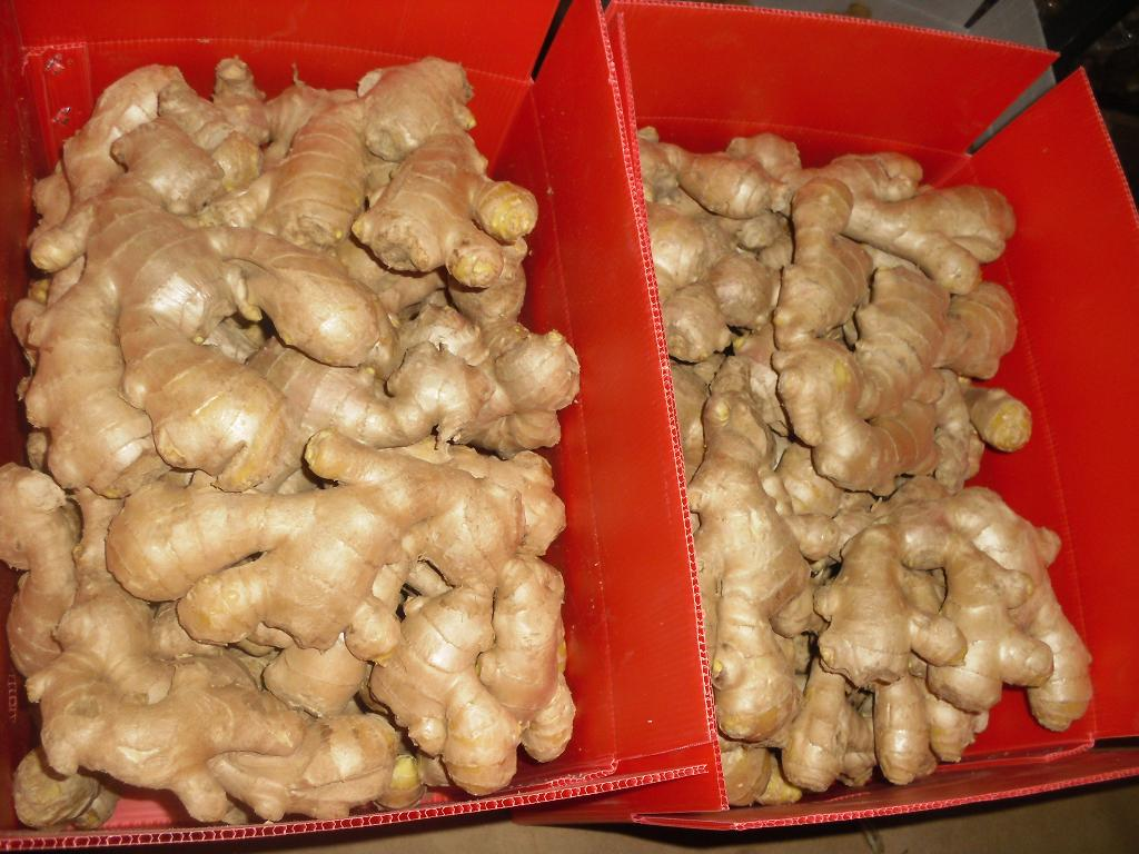 air dried ginger red color box