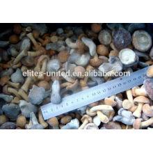IQF frozen market prices for mushroom mixed mushroom