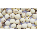 Semente de lótus orgânicos em massa, sementes de lótus sem núcleo