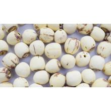 Semilla de loto orgánico a granel, semilla de loto sin núcleo