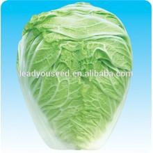 MCC04 Dabai super grande repolho chinês sementes f1 híbrido para o cultivo