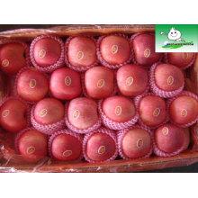 Shandong fuji manzana, los precios del mercado de frutas de manzana