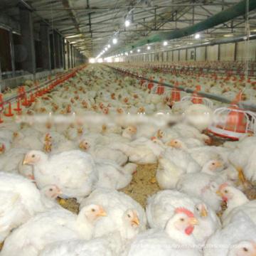 Set completo de alta calidad automático de aves equipos para pollos de engorde