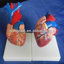 ISO tamanho da vida modelo do coração humano, modelo educacional do coração, modelo de anatomia cardíaca