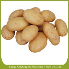 Mesh bag or carton packing potato