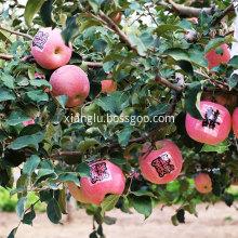 Fruit suitable for women
