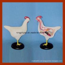 Tierisches Anatomisches Modell für Studenten, die Huhn lernen