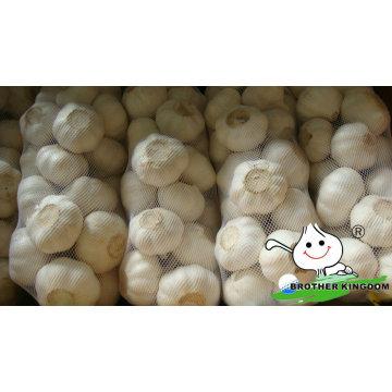 Frischer weißer Knoblauch / frischer Knoblauch / Jinxiang Knoblauch
