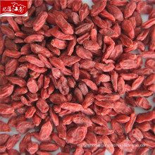 Ningxia goji berry in China