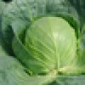 Grade A fresh green cabbage for sale