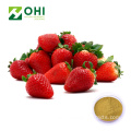 garden strawberry extract powder