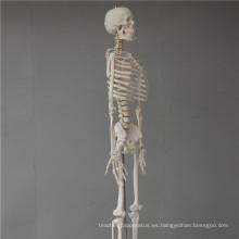 China barato modelo del esqueleto de la mano de tamaño natural de China ISO