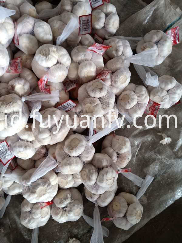 normal white garlic to UK
